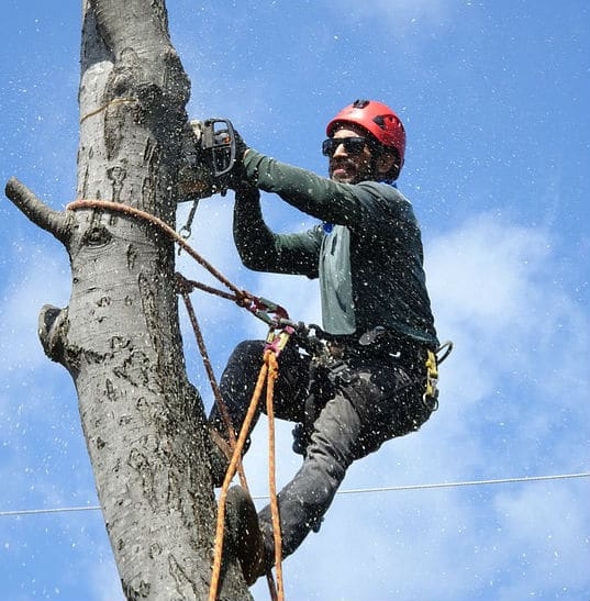 Tree Service in Bloomington IN Spring Cleanup