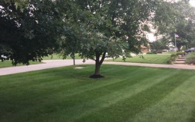 When To Aerate Your Indiana Lawn
