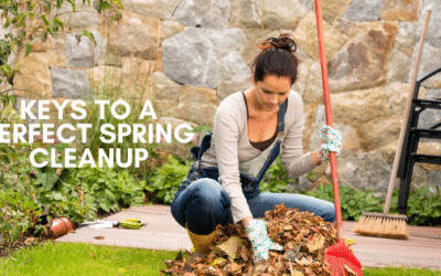 Keys To a Proper Yard Cleanup