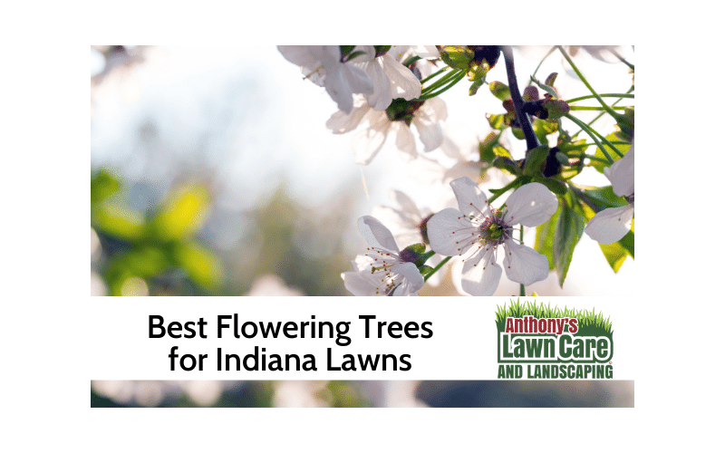 The Best Flowering Trees to Add to Your Indiana Lawn