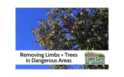 Taking Down Limbs And Trees By Powerlines and Dangerous Situations