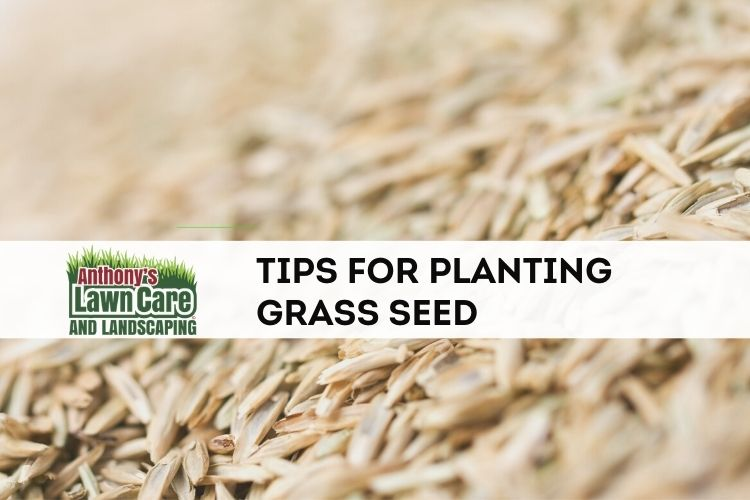 Tips for Successfully Planting Grass Seed